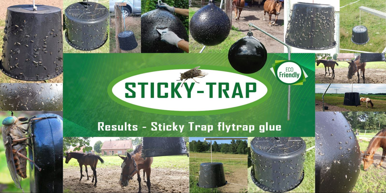 Results Sticky Trap Horsefly trap with a bucket
